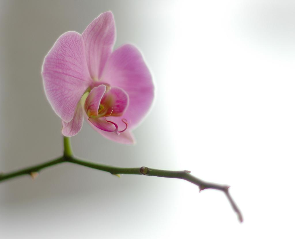 Orchid courtesy of Atle Brunvol via Flickr
